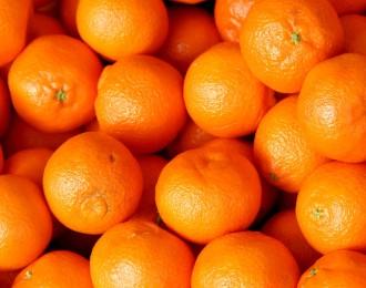 辰颐物语:早熟柑橘纷纷上市 价格走势将如何?