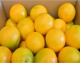"""辰颐物语:云南新产品""""云冠橙""""即将上市"""