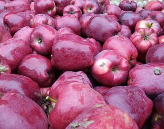 辰颐物语:礼县苹果到底是如何走出深山、实现逆袭的呢?