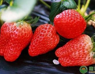 3月份草莓多少钱一斤?2019年最新产区草莓价格行情