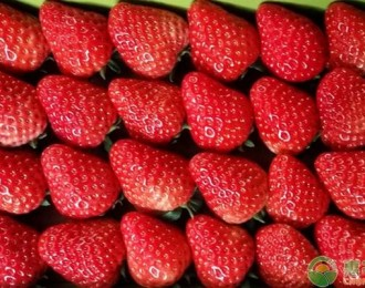 2019年草莓价格多少钱一斤?最新产区草莓价格行情