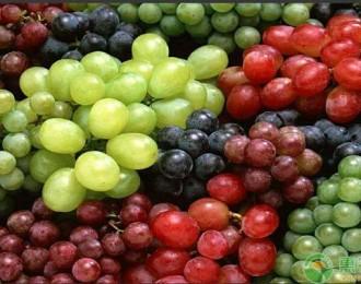 酿酒的葡萄品种,酿酒葡萄和食用葡萄的区别