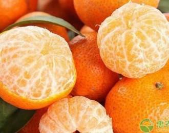 2019全国最新砂糖橘价格行情分析,未来砂糖橘种植前景怎样?