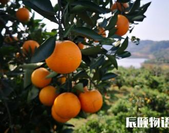 辰颐物语:麻阳冰糖橙