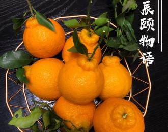 辰颐物语:不知火丑橘来袭