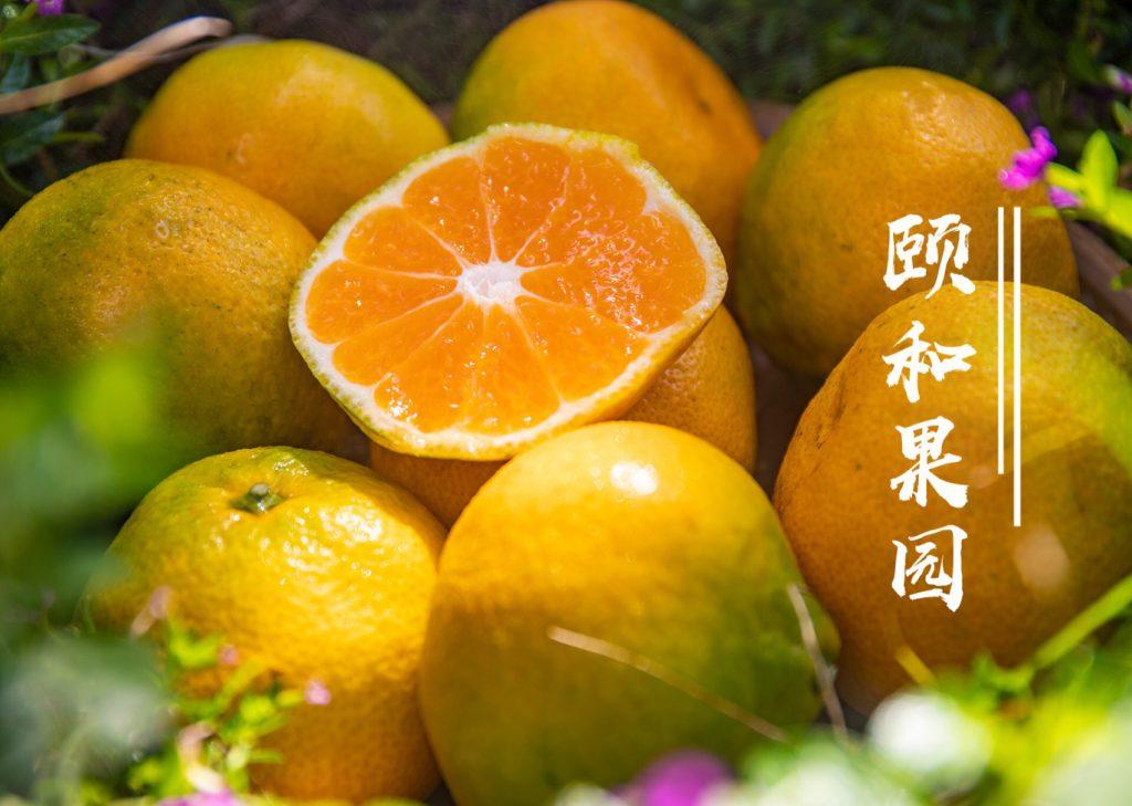 颐和果园好物上新-云南华溪蜜桔