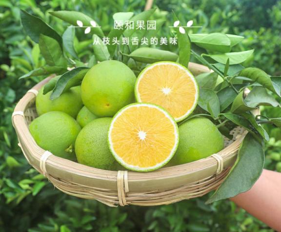 颐和果园——云南绿橙来报道