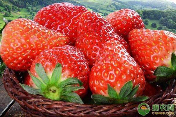 冬季上市的草莓品种有哪些?2019草莓价格行情预测