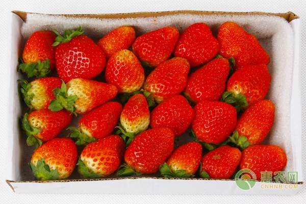 现在草莓价格如何?2019年1月19日最新草莓价格行情